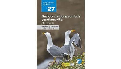Gaviotas reidora, sombría y patiamarilla en España